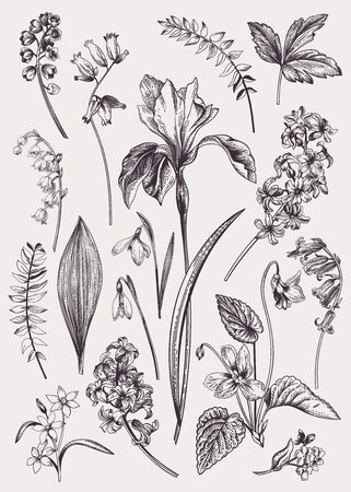 Illustration pour Set with spring flowers. Vintage botanical illustration. Vector floral elements. Black and white. - image libre de droit