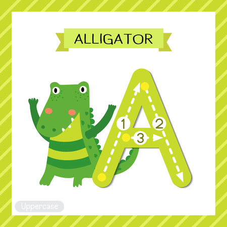 Letter A uppercase cute children colorful zoo and animals ABC alphabet tracing flashcard of Alligator for kids learning English vocabulary and handwriting vector illustration.