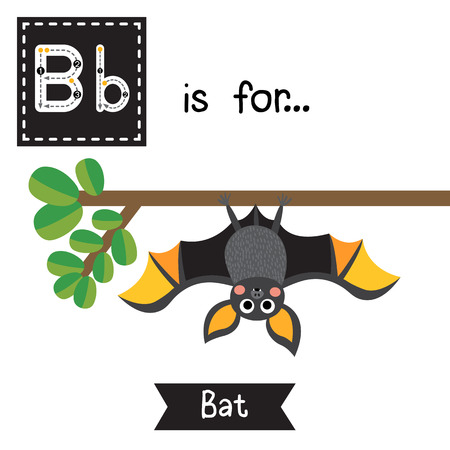 Foto de Cute children ABC alphabet B letter tracing flashcard of Bat roosting branch for kids learning English vocabulary in Happy Halloween Day theme. - Imagen libre de derechos