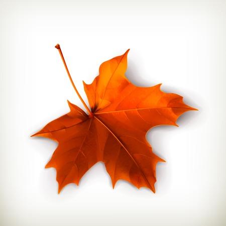 Ilustración de Maple leaf - Imagen libre de derechos