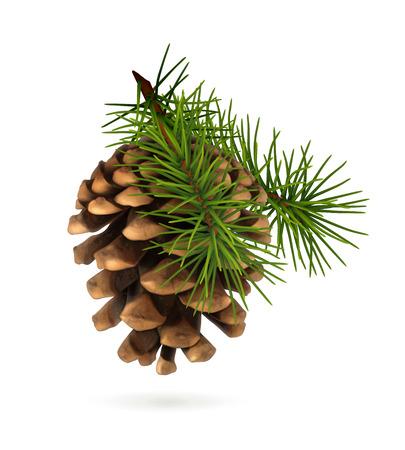 Illustration pour Pine cone with branch - image libre de droit
