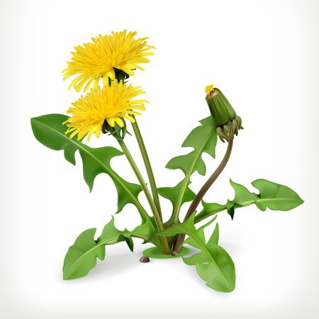Illustration pour Dandelion flowers, vector icon - image libre de droit