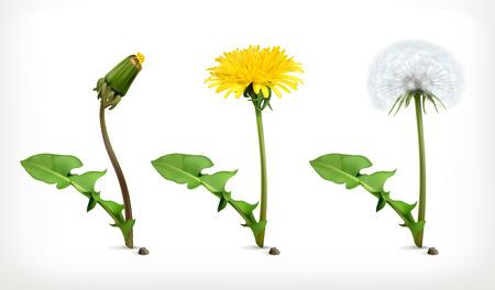 Illustration for Dandelion flowers, vector icon set - Royalty Free Image