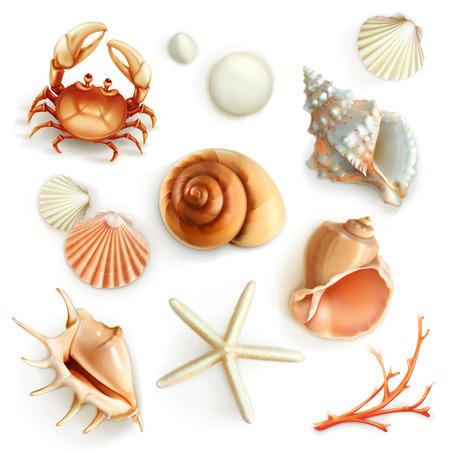 Illustration for Seashells, set vector icons - Royalty Free Image