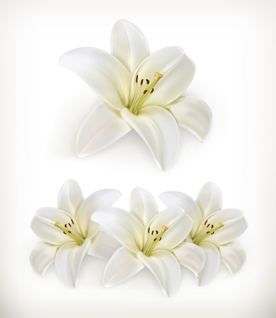 Illustration pour White lily, vector icons - image libre de droit