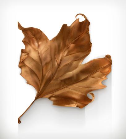 Illustration pour Dry maple leaf, autumn vector icon - image libre de droit