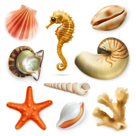 Seashells, icon set, isolated on white background