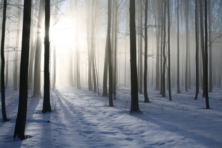 Path in the misty winter forest backlit by the morning sun