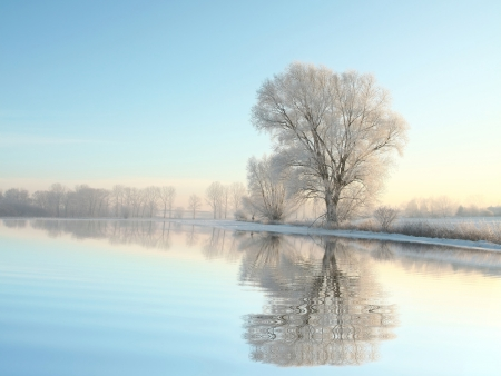 Picturesque winter landscape of frozen trees lit by the rising sun