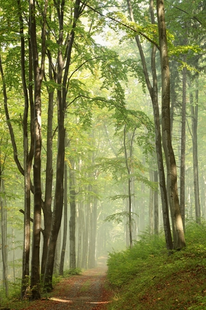 Photo for Path through misty autumn forest in the sunshine - Royalty Free Image