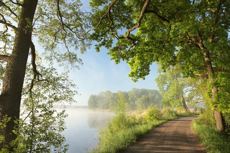 Photo for Country road on the edge of a lake on a foggy morning - Royalty Free Image