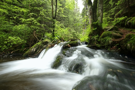 Photo for Stream flows through the deciduous forest - Royalty Free Image