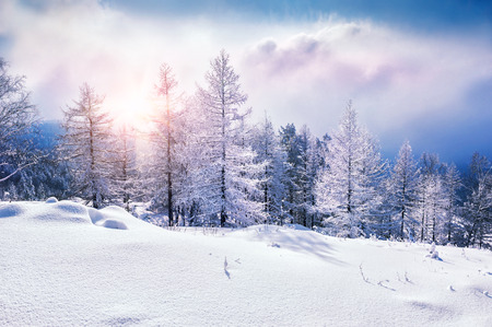 Foto de Snow covered trees in the mountains at sunset. Beautiful winter landscape. Winter forest. Creative toning effect - Imagen libre de derechos