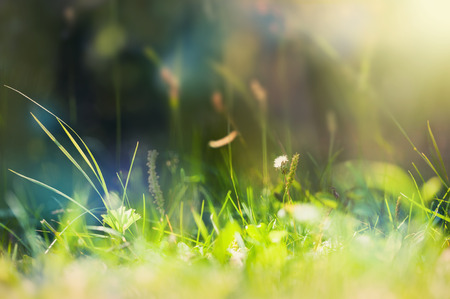 Photo for Green wild grass on a forest meadow. Macro image with small depth of field. Vintage filter - Royalty Free Image
