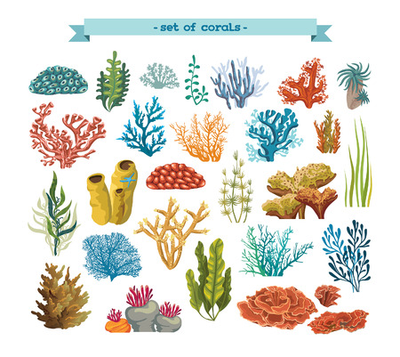 Set of isolated colorful corals and algaes on a white background. Vector underwater flora and fauna.
