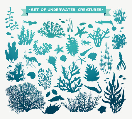 set of sea animals - coral, fish, shrimp, seashells and starfish. Underwater ocean creatures on a white background.