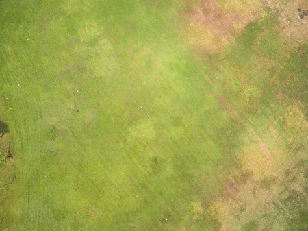 Photo for Natural grass texture, Aerial view of park - Royalty Free Image