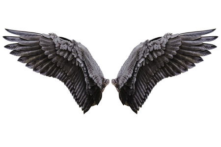 Foto de Angel wings, Natural black wing plumage with clipping part - Imagen libre de derechos