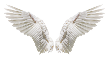 Photo for Angel wings, Natural white wing plumage with clipping part - Royalty Free Image
