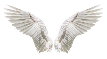 Foto de Angel wings, Natural white wing plumage with clipping part - Imagen libre de derechos