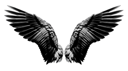 Foto de Angel wings, Natural black wing plumage isolated on white background with clipping part - Imagen libre de derechos