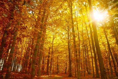 Photo pour Golden autumn, Autumn Trees Leaves Fall - image libre de droit
