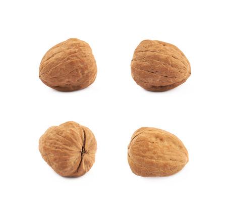 Foto de Single walnut isolated over the white background, set of four different foreshortenings - Imagen libre de derechos
