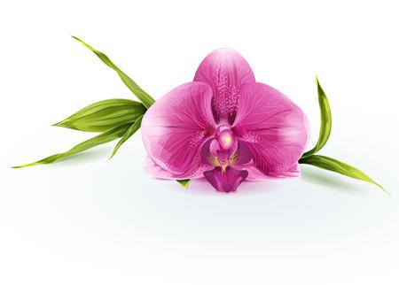 Illustration pour Illustration of a pink orchid - image libre de droit