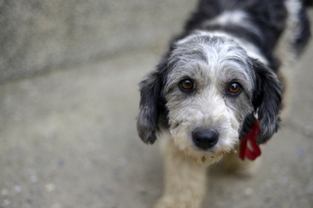 Foto de Sad look of a cute stray dog - Imagen libre de derechos