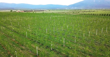 Photo pour drone photography,aerial view of orchards in resen, prespa, macedonia - image libre de droit
