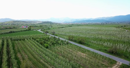 Photo pour drone photography,aerial view of orchards in resen, prespa, macedonia,image - image libre de droit