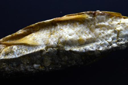 Photo pour dry fish Alburnus belvica , famous tzironka from Prespa,Macedonia - image libre de droit