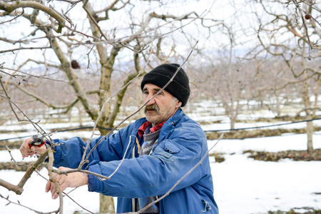Photo pour RESEN, MACEDONIA. FEBRUARY 3, 2019- Farmer pruning apple tree in orchard in Resen, Prespa, Macedonia. Prespa is well known region in Macedonia on producing high quality apples. image - image libre de droit