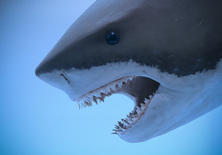 Foto de A Portrait of the Head and Jaws of a Great White Shark - Imagen libre de derechos