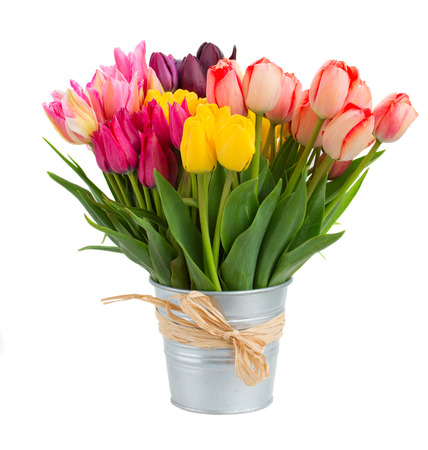 Photo for Bunch  of spring  tulips flowers in metal pot   isolated on white - Royalty Free Image