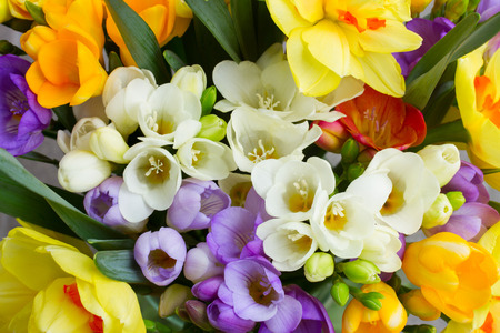 Foto de bunch of fresh spring  freesea flowers close up - Imagen libre de derechos
