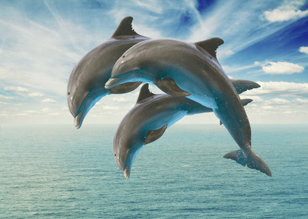 Foto per three  jumping dolphins - Immagine Royalty Free