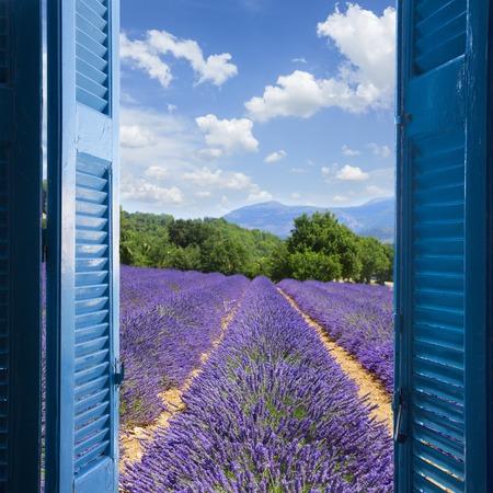 Photo pour Lavender field with summer blue sky through wooden shutters, France - image libre de droit