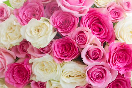 Foto de background of pink and white fresh rose flowers close up - Imagen libre de derechos