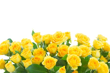 Foto de border  of yellow roses  isolated on white background - Imagen libre de derechos