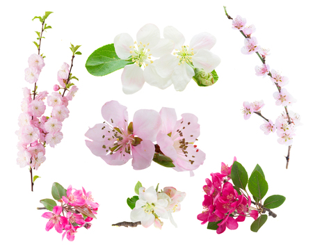 Set of fresh flowers  tree twigs with blooming spring flowers isolated on white background