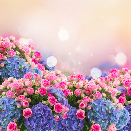 Photo for bunch of fresh pink roses and blue hortenzia flowers over pink fansy background, fantasy garden - Royalty Free Image