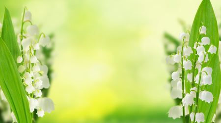 Photo pour Lilly of the valley flowers and leaves on green bokeh background banner with copy space - image libre de droit