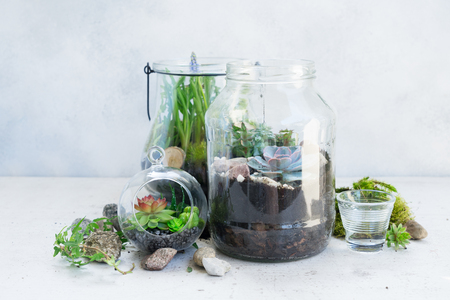 Foto de mason jars with plants inside on light gray background, indoor gardening concept - Imagen libre de derechos