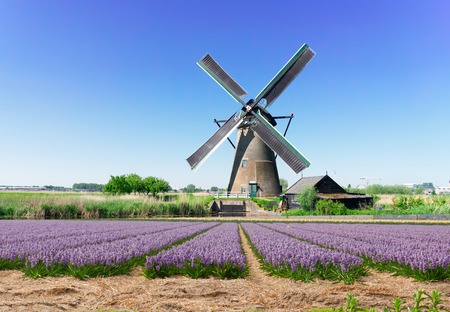 Foto de landscape with traditional Dutch windmill with traditional hyacinth filed, Netherlands - Imagen libre de derechos