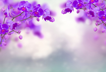 Photo pour Purple orchid flowers with butterflies on defocused gray - image libre de droit