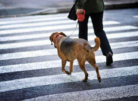 Man with a dog crossing the street
