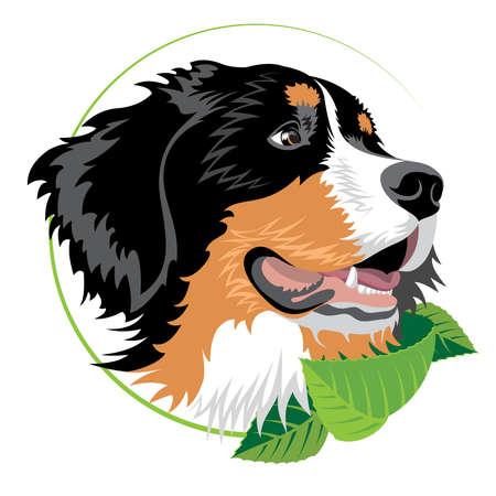 Ilustración de Bernese mountain dog with green leaves. Illustration suitable for veterinary clinics and other organizations of breeders. - Imagen libre de derechos