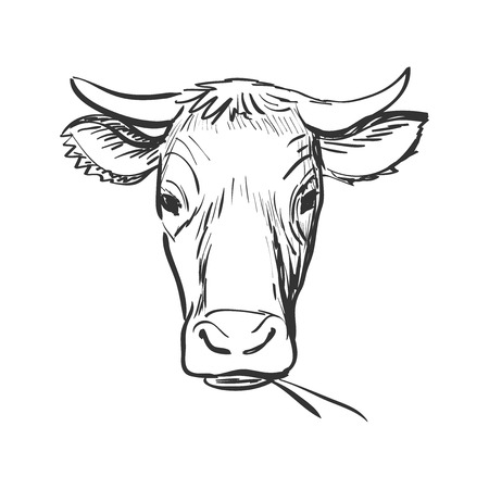Ilustración de doodle cow, Cow skull sketch. Isolated in white background. Excellent vector illustration, EPS 10 - Imagen libre de derechos