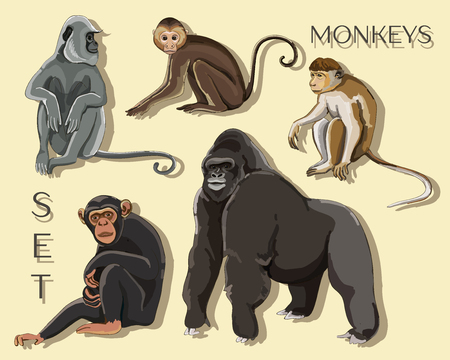 Illustration for Different types of monkeys - Royalty Free Image